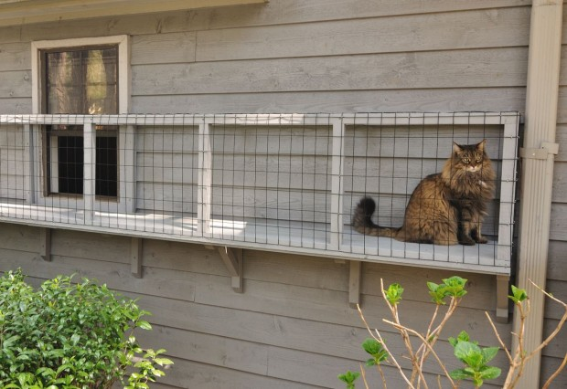 Screened Cat Porches are a great way to keep your kitty safe