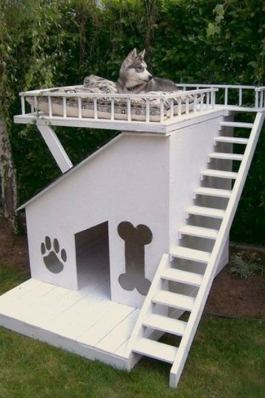 The 25 Best Unique Dog House Designs