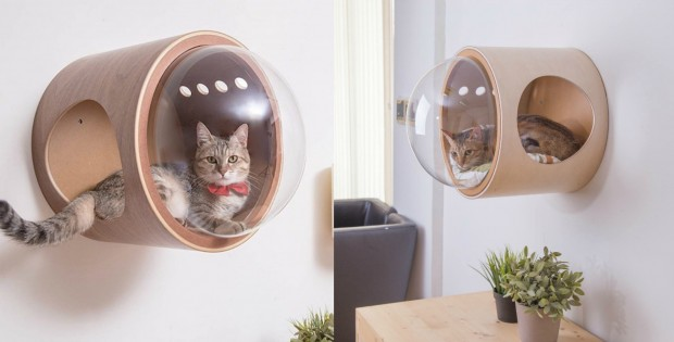Your Cat Needs This Wall-Mounted Bed