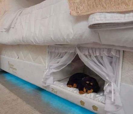 Built-in dog beds underneath people bed