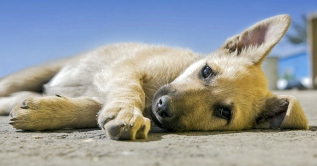 Holland becomes first country without homeless dogs and here's how they did it