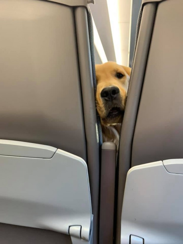 Cute pup gets bored on a long flight – decides to entertain the passengers behind him