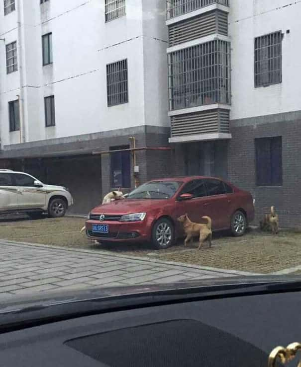 Stray dog got kicked by cruel driver, comes back with its friends to destroy the car