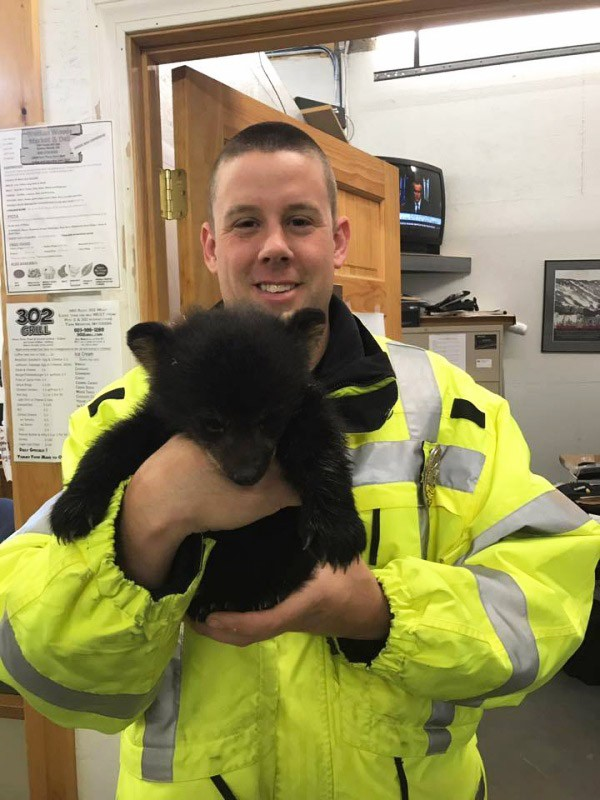 Sick bear cub gets left behind her family, then cop risks his own life to save him